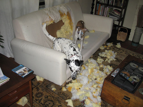 dog-destroys-couch/Dog Training
