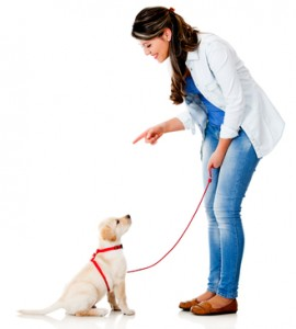 obedience training familypet Vet