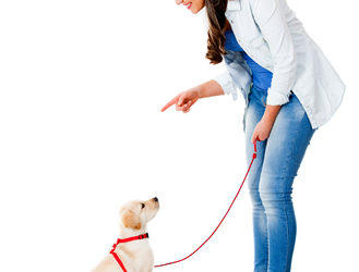 Basic Obedience Dog Training