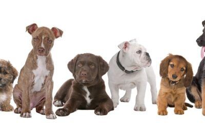 How to Raise and Train an Owner ( Puppy Manual)