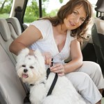 Dog safe for travelling in a car
