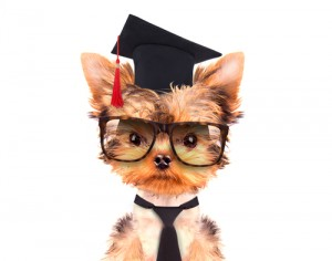 graduated dog/ dog obedience school in Adelaide