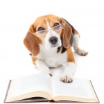 Dog reading/ dog school