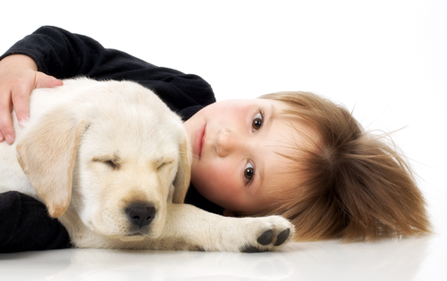 Child with Labrador retriever puppy/puppy health