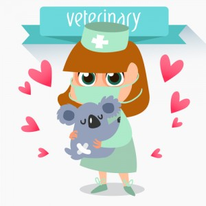 New Vet with Koala