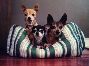 osteoarthritis warm dog beds