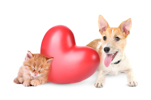 heartworm in dogs and cats in South Australia