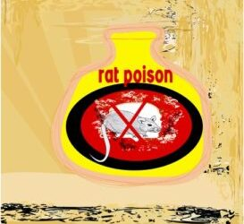 Rat Bait Poisoning in Dogs and Cats