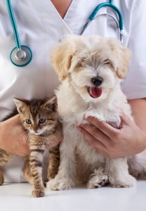Little dog and cat at the veterinary checkup at Familypet Vet