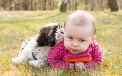Children and Puppies: